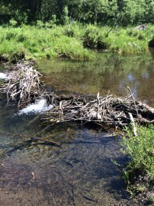 Broken_beaver_dam_on_Blackwood_Creek_June_2014